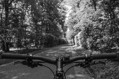 在步行期间的登山车船舵通过夏天公园 免版税库存照片