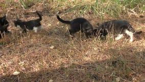 在步行的小猫 股票录像