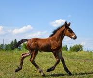 在步行的马在一个温暖的晴天 免版税库存照片