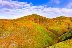 在步行者峡谷在superbloom期间,盖山谷和土坎,湖埃尔西诺的花菱草的风景, 库存照片