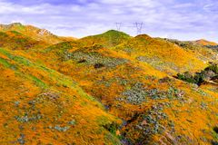 在步行者峡谷在superbloom期间,盖山谷和土坎,湖埃尔西诺的花菱草的风景, 免版税库存照片