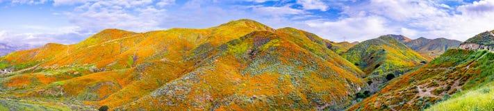 在步行者峡谷的全景在superbloom,盖山谷和土坎,湖埃尔西诺的花菱草期间 库存图片