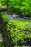 在步行道路旁边的生苔砖 图库摄影