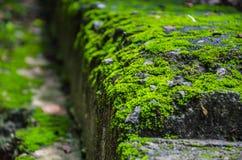 在步行道路旁边的生苔砖 库存照片