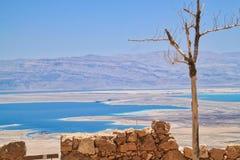 在死海的看法的前景的树在Judean沙漠如被看见从马萨达 库存图片