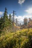 在死的森林照片的凋枯的树与五颜六色的透镜火光 库存照片