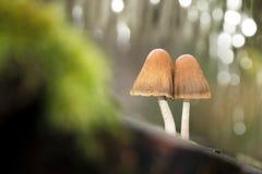 在残余部分的两个蘑菇 图库摄影