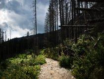 在残破的树之间的石路面 免版税库存照片