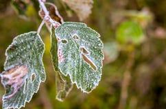 在残破的叶子的冷淡的解冻在秋天时间 免版税库存照片