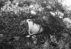 在残破的罐的退色的花 免版税库存图片