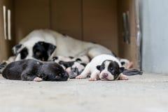 在母亲附近的无家可归的小狗睡眠 库存图片