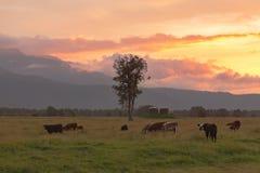 在母牛农场的美丽的日落天空 免版税图库摄影
