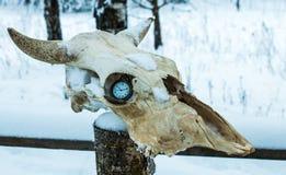 在母牛头骨轨道的怀表  免版税库存图片