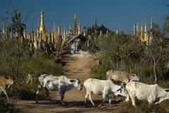 在母牛taing寺庙的客栈stupas附近 库存照片