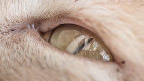在每天的猫画象生活 免版税库存图片