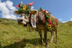 在每年季节性牲畜移动的装饰的母牛在Switz的Engstlenalp 免版税库存图片
