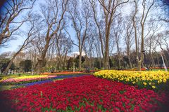在每年4月郁金香节日期间的五颜六色的花床在伊斯坦布尔 库存照片