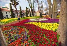 在每年4月郁金香节日期间的五颜六色的花床 免版税图库摄影