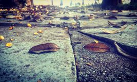在每片下落的叶子有一些痛苦 库存图片