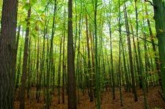 在比得哥什附近的森林 库存图片