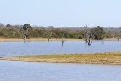 在比赛储备waterhole的死的树在非洲 库存图片