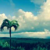在毛伊,夏威夷的棕榈树 库存照片
