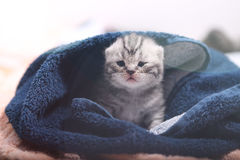 在毛巾下的小小猫 免版税库存照片
