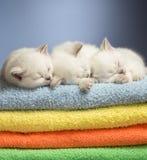 在毛巾的休眠小猫 免版税库存图片