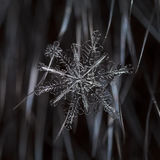 在毛皮的自然雪花 免版税库存照片