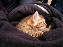 在毛线衣的猫 库存图片