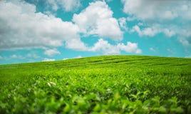 在毛里求斯拍的风景照片 免版税库存照片