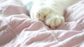 在毯子的猫爪子 股票录像