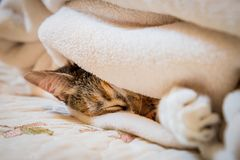 在毯子的猫 图库摄影