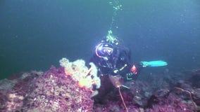 在水下海底的背景的轻潜水员剪影  股票视频