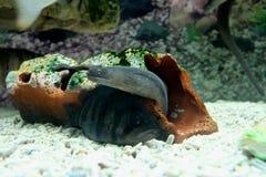 在水下的世界的海生动物 免版税库存照片