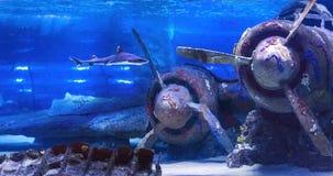 在水下的凹下去的飞机在土耳其的安塔利亚水族馆 免版税库存图片