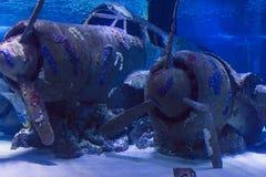 在水下的凹下去的飞机在土耳其的安塔利亚水族馆 图库摄影