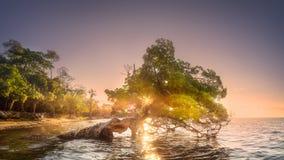 在水下的婆罗洲的树和海岸靠岸 库存图片