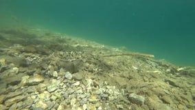 在水下的射击 透明的水,完全地透明 股票视频