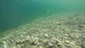 在水下的射击 透明的水,完全地透明 影视素材