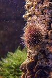 在水下的尖刻的珊瑚 免版税库存图片