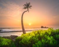 在水下的斯里兰卡的树和海岸靠岸 库存照片