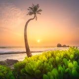 在水下的斯里兰卡的树和海岸靠岸 图库摄影