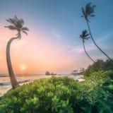 在水下的斯里兰卡的树和海岸靠岸 库存图片
