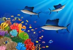 在水下的旗鱼游泳 库存例证