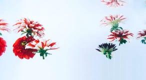 在水下的浮动的美丽的花 免版税库存照片