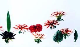 在水下的浮动的美丽的花 免版税库存图片