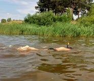 在水下的游泳者在河 免版税库存图片