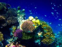 在水世界之下的马尔代夫 免版税库存照片