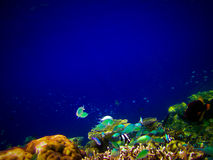 在水世界之下的马尔代夫 免版税库存图片